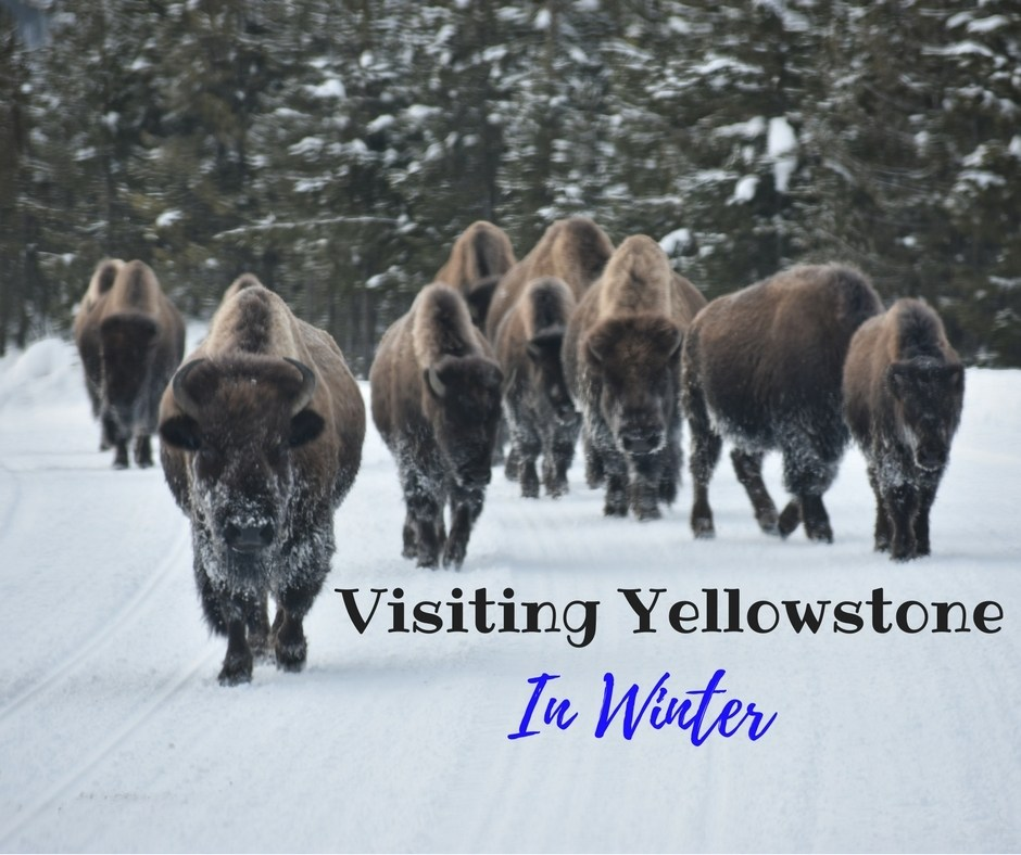 Visiting Yellowstone in Winter